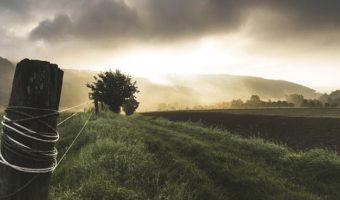 Historical Overview of Farming in the Chautauqua-Erie Grape Region:  Part 3